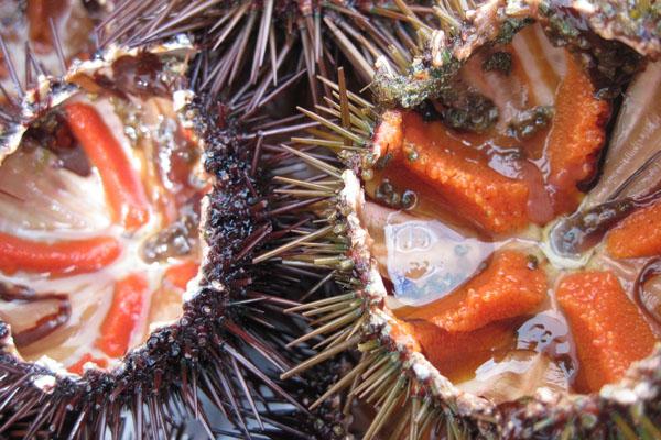 Morski ježevi