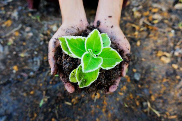biodinamička proizvodnja