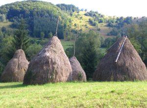 Biodiverzitet Srbije
